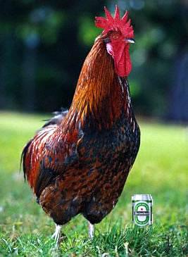 Pollo a la cerveza