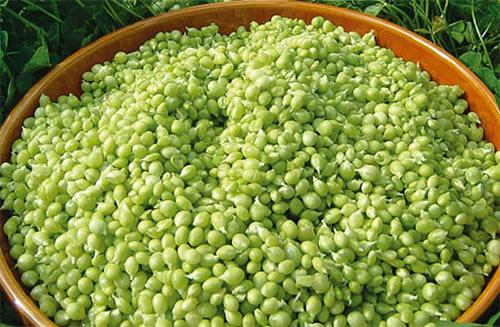 Caviar vegetal – Guisante Lágrima de costa